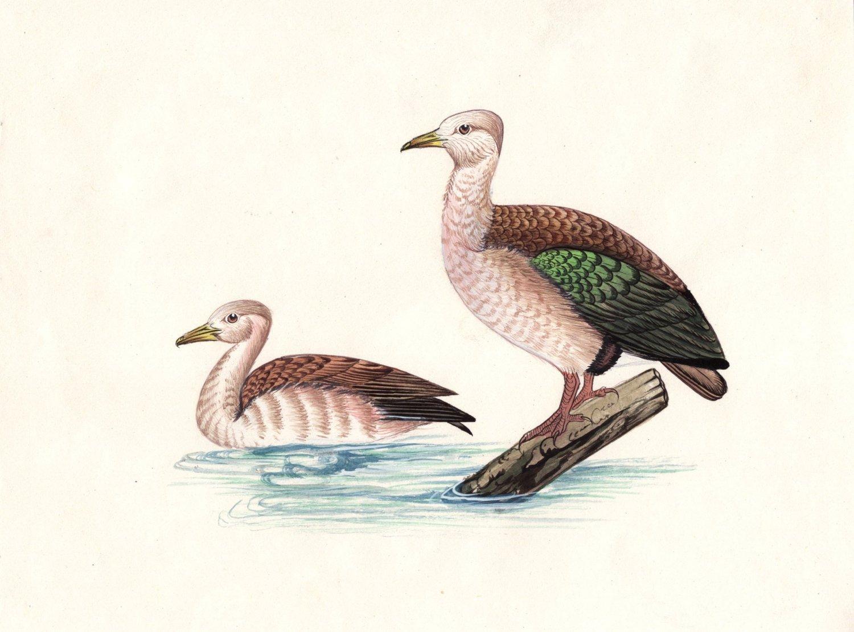 Duck Painting Rare Handmade India Miniature Watercolor Bird Art Unique Gift Item