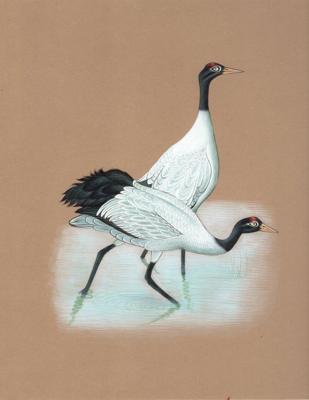 Indian Crane Miniature Painting Rare Handmade Watercolor Bird Nature Bird Art