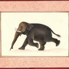 Elephant Watercolor Painting Hand Painted Indian Animal Miniature Nature Art