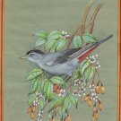 American Gray Catbird Art Handmade Indian Miniature Ornithology Nature Painting