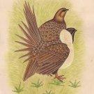 Quail Bird Art Indian Handmade Wild Life Nature Miniature Ethnic Decor Painting