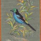 Paradise Tanager Amazon Basin Bird Art Handmade Indian Miniature Nature Painting