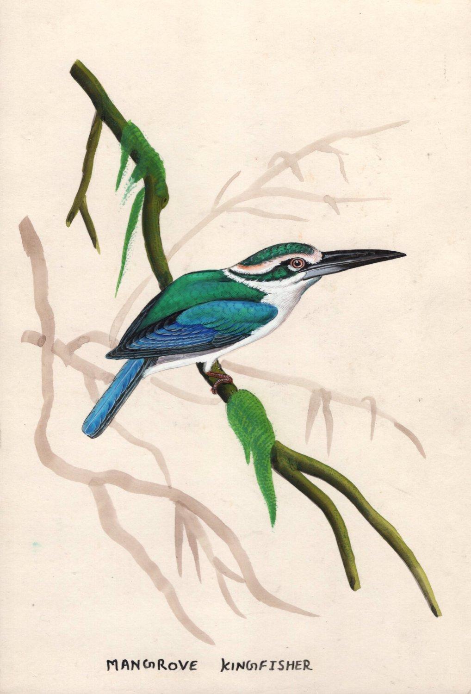 Indian Miniature Painting Handmade Mangrove Kingfisher Bird Wild Life Nature Art