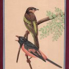 Ornithological Painting Rare Handmade Indian Miniature Watercolor Bird Pair Art