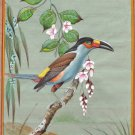 Indian Miniature Painting Rare Handmade South American Laminated Toucan Bird Art