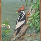 Ivory Billed Woodpecker Bird Painting Indian Miniature Nature Handmade Decor Art