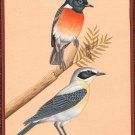 Bird Miniature Indian Art Handmade Watercolor Ethnic Folk Feather Pair Painting