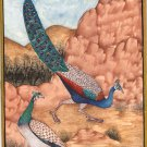 Peafowl Peacock Indian Art Handmade Bird Nature Miniature Painting on Laminate
