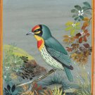 Indian Miniature Painting Handmade Copper Smith Bird Watercolor Wild Life Art