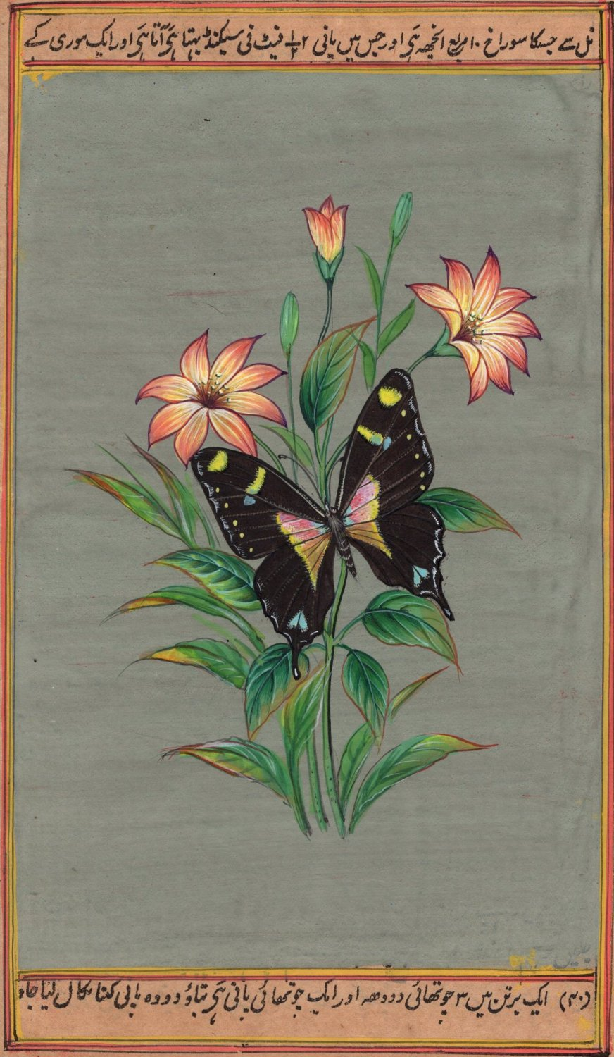 Butterfly Nature Painting Handmade Watercolor Indian Miniature Wild Life Art