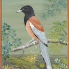 Treepie Bird Miniature Art Handmade Indian Ornithological Nature Decor Painting