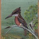 Giant Kingfisher Bird Painting Handmade Ornithology Nature Indian Miniature Art
