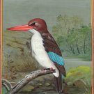 Chocolate Backed Kingfisher Bird Painting Handmade Nature Indian Miniature Art