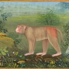 Indian Miniature Art Handmade Assam Macaque Monkey Watercolor Nature Painting