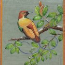 Magnificent Bird Art Handmade Home Decor Indian Miniature Ornithology Painting