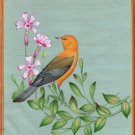 Prothonotary Warbler Bird Art Handmade Indian Miniature Ornithology Painting