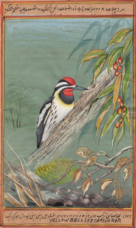 Yellow Bellied Sapsucker Bird Painting Handmade India Miniature Nature Decor Art