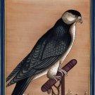 Indian Falcon Miniature Art Handmade Bird of Prey Miniature Cotton Painting