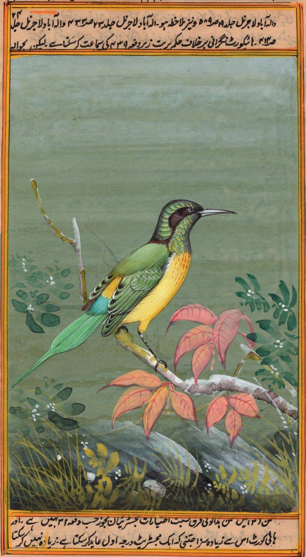 India Miniature Painting Handmade Green Tailed Sunbird Watercolor Wild Life Art