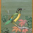 India Miniature Painting Handmade Green Tailed Sunbird Watercolor Wild Life Art