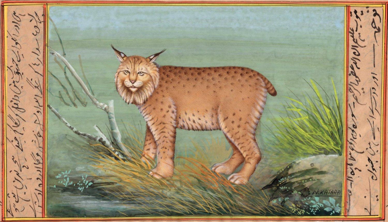 Indian Miniature Bobcat Wild Life Art Handmade Animal Watercolor Nature Painting