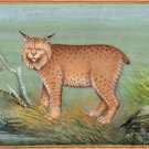 Indian Miniature Bobcat Wild Life Art Handmade Animal Watercolor Nature Painting
