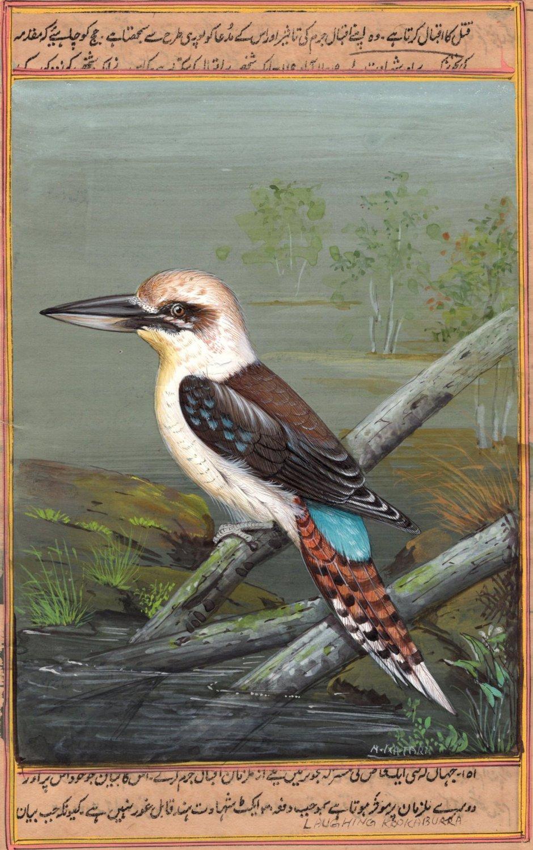 Indian Miniature Nature Painting Handmade Laughing Kookaburra Kingfisher Art