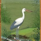 Indian Nature Miniature Painting Handmade Open Bill Stork Bird Watercolor Art