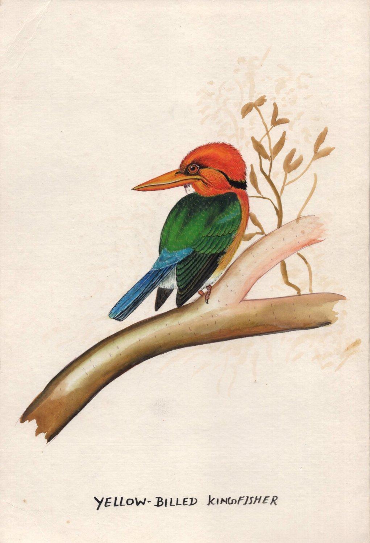 Yellow-Billed Kingfisher Bird Painting Handmade Indian Miniature Watercolor Art
