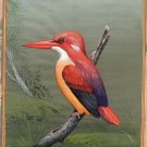 Red Backed Kingfisher Indian Miniature Painting Handmade Watercolor Nature Art