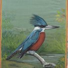 Indian Bird Miniature Painting Handmade Ringed Kingfisher Watercolor Nature Art