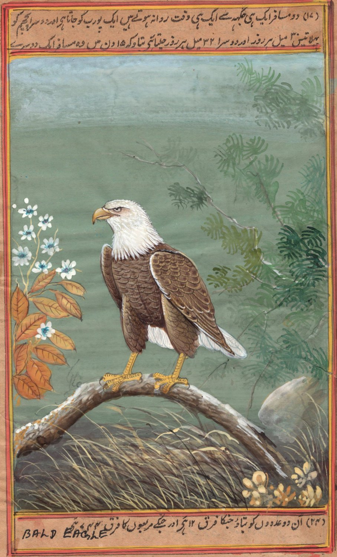 American Bald Eagle Miniature Painting Handmade Ethnic Indian Nature Bird Art