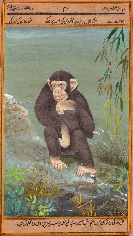 Chimpanzee Animal Painting Handmade Indian Miniature Watercolor Wild Life Art