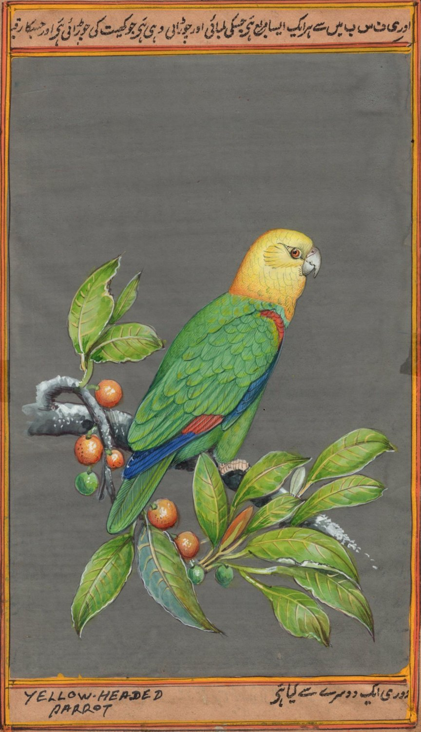 Yellow Headed Parrot Painting Handmade Indian Miniature Nature Amazon Bird Art