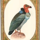 Indian Vulture Bird of Prey Art Handmade Miniature Watercolor Ornithology Art