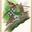Indian Bird of Paradise Watercolor Painting of Sparrow on Silk Fine Handmade Art