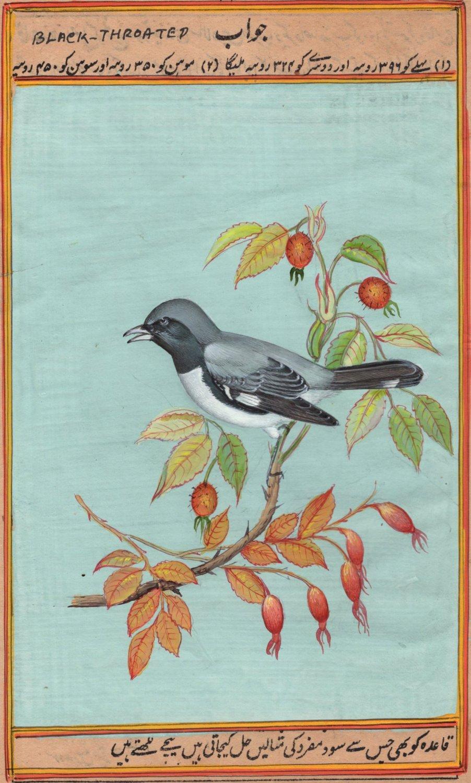 Black Throated Blue Warbler Bird Painting Handmade India Miniature Nature Art