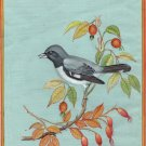 Black Throated Blue Warbler Bird Painting Handmade India Miniature Nature Art