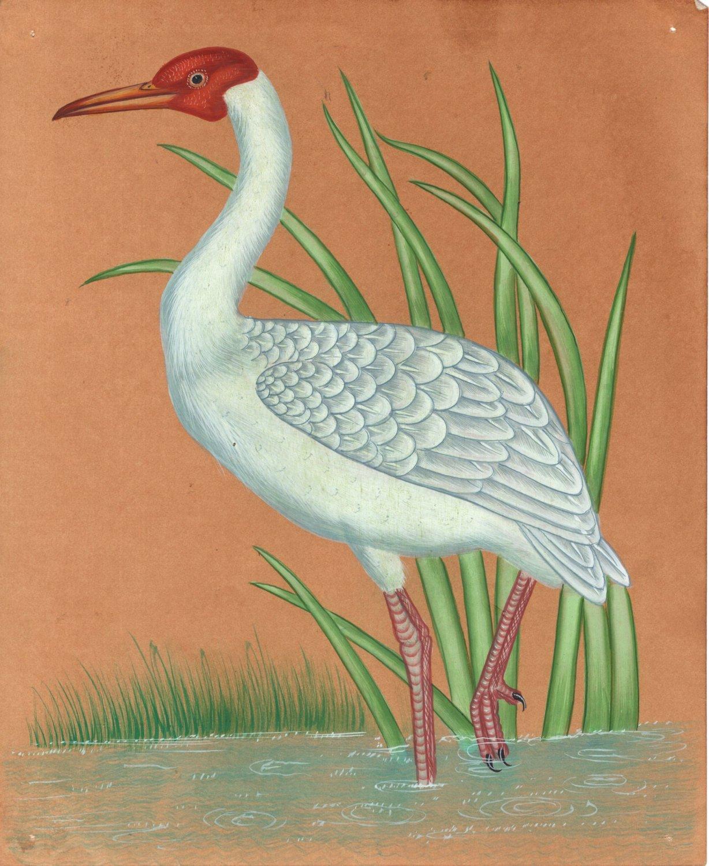 Indian Miniature Bird Painting Handmade Great Egret Heron Nature Wild Life Art