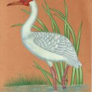 Indian Miniature Bird Painting Handmade Great Egret Heron Nature Wild Life Art
