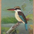 Indian Miniature Striped Kingfisher Bird Painting Handmade Ethnic Nature Art