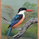 Black Capped Kingfisher Bird Painting Handmade Indian Miniature Decor Nature Art