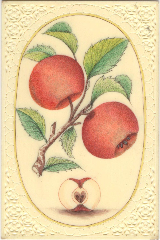 Indian Red Apple Fruit Art Handmade Wild Plant Nature Mughal Miniature Painting