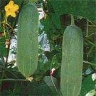 Leo Cucumber Seeds