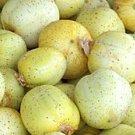 Lemon Cucumber Seeds