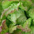 Blushed Butter Cos Lettuce Seeds