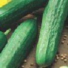 Tendergreen Burpless Cucumber Seeds