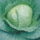 Ferry's Round Dutch Cabbage Seeds