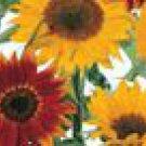 Sunflower Mix Seeds