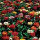 State Fair Giants Mix Zinnia Seeds